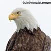 Bald Eagle - looking over the edge of a street light. It was an overcast day so I'm not happy with the color and light but i was close so I was able to get some detail. I didn't want to scare her/him with flash. Taken in 2012.  Anyone have suggestions for a Photoshop plug-in that will help get more out of shots taken on overcast days?  Update: I appreciate all the comments and suggestions. I will check them out. Thank you
