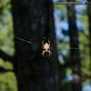 Spider at home -Taken at Mima Mounds near Olympia, Wa.