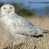 Assorted Birds : Assorted bird pictures