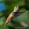 Bird Action Photos : Bird action and flight pictures