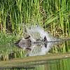 Bird Photos : Raptor, song and water bird photos