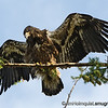 Birds of Prey 2 : Birds of prey pictures