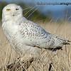 Assorted Birds and Animals : Bird and Animal photos