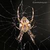 Spider - taken near Olympia, Wa.