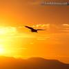 Vulture at Sunset - taken in Snake River Birds of Prey Area near Kuna, Id.
