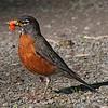 assorted song birds : Assorted Song Birds