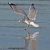 Seagull - taken near Olympia, Wa.  I really appreciate the comments!