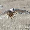 Assorted Raptors : Assorted raptors - Eagles, Hawks, Harriers, Falcons, Owls